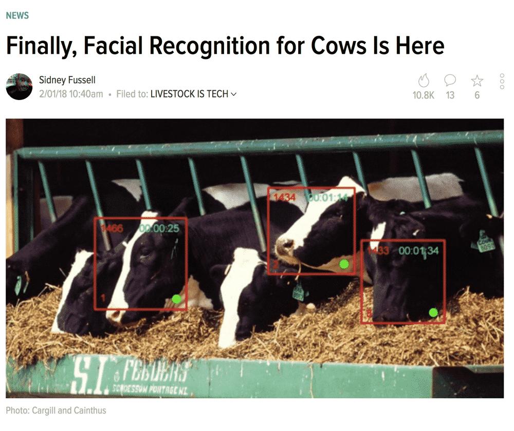 FacialRecognitionforCows
