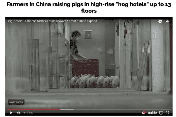 PigsVerticalFarming