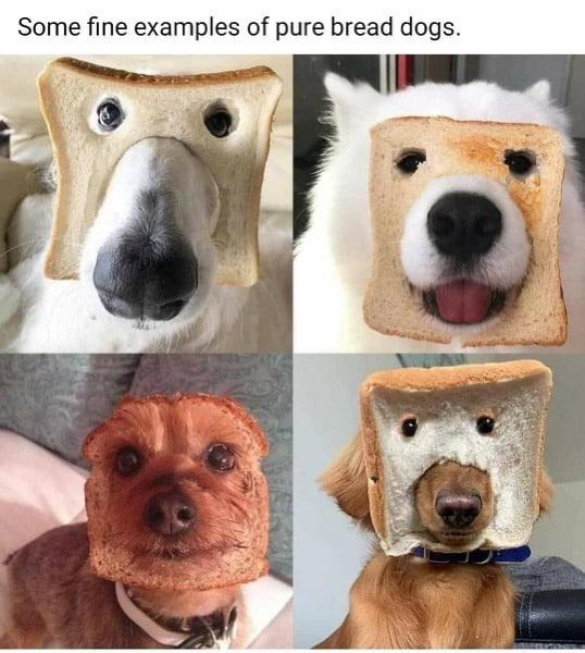 PureBreadDogs